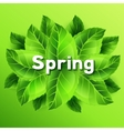Spring with bunch of green leaves vector image