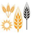 Barley vector image vector image