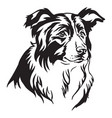 decorative portrait of border collie vector image vector image