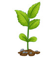 green plant growing from underground vector image vector image