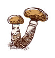honey agaric color sketch vector image