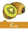 kiwi in hand drawn graphics vector image vector image