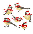 set funny realistic tits and bird feeder on vector image