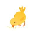 cute baby chicken pecking grain funny cartoon vector image vector image
