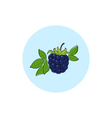 Icon Colorful Blackberry vector image vector image