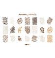 tiger prints patterns safari leopard jaguar skin vector image vector image