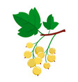 cartoon white currant berries with green leaves vector image vector image