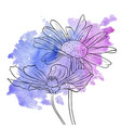 drawing flowers daisy vector image vector image