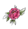 garden peony watercolor hand painted isolated vector image