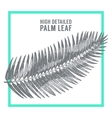 Palm leaves draw sketch vector image