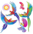 different parrots isolated on white background vector image vector image