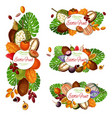 exotic fruits tropical berries palm leaves vector image vector image
