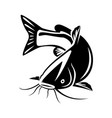 graphic catfish on white background vector image vector image