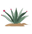image agave or color