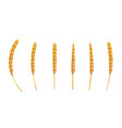 set wheat ear 3d realistic vector image