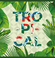 slogan tropical with frame leaves vector image vector image