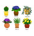 houseplants and flowerpots vector image