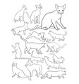 cats line drawing vector image