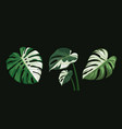 Monstera leaves spotted collections design
