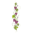 Vine leaves with grapes vector image vector image
