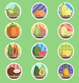 Tropical Fruit Flat Icon vector image
