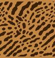 cheetah or ocelot vector image vector image