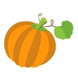 Pumpkin with leafs isolated on white background vector image