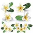 realistic detailed 3d frangipani flowers set vector image vector image