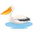 pelican sitting on water vector image