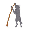 wolf stands color vector image vector image
