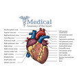 anatomical human heart hand drawn poster