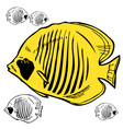 Butterfly fish Red Sea picture vector image vector image
