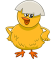little chick cartoon character vector image vector image
