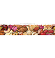 seamless border or pattern with peanuts and cashew vector image vector image