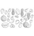 sketch fruits isolated icons tropical set vector image