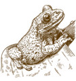 engraving of black-spotted casque-headed tree frog vector image vector image