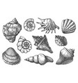 protective hull seashell pencil sketch icon set vector image