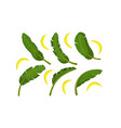 tropical green palm leaves and ripe bananas vector image vector image