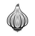garlic black monochrome graphic object vector image