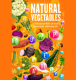 vitamins in tomato bean carrot corn vegetables vector image vector image