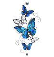 Blue Morpho and White Butterflies vector image
