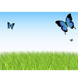 grass sky butterfly vector image vector image