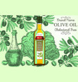 olive oil ads poster banner template vector image
