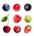 sweet berries realistic set vector image vector image