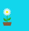 white daisy chamomile icon flower pot cute plant vector image vector image