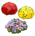yellow pink and red flower beds isolated vector image vector image