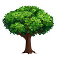 a large tree with a thick crown vector image