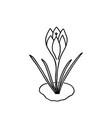 flower crocus doodle hand-drawn vector image