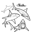 Graphic collection of sharks vector image