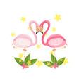 pink flamingo couple love family concept exotic vector image